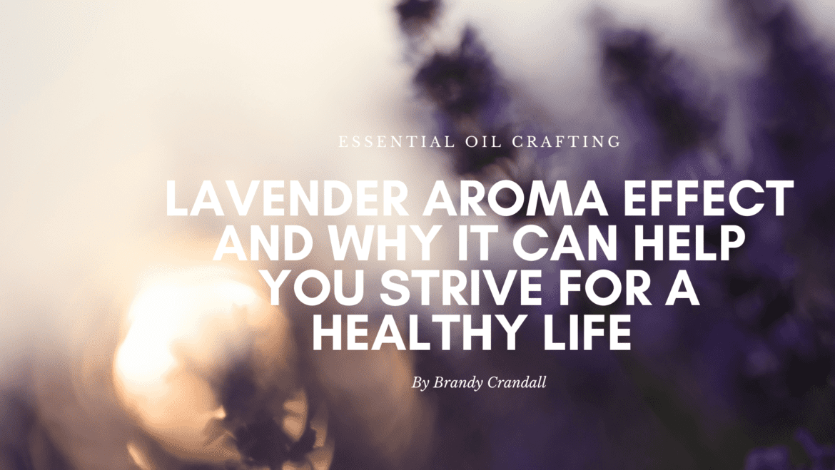 The Lavender Aroma Effect and why it can help you strive for a healthier life